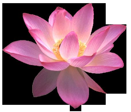 Lotus_Clipart
